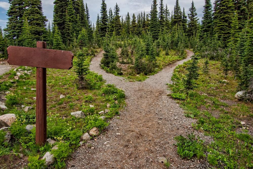 STEM Career Guidance split road into forest