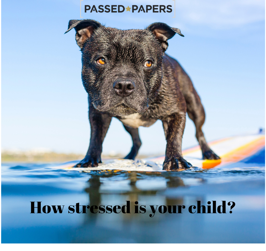How stressed is your child? Dog on surfboard